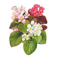 Семена однолетних цветов